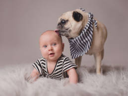 6 month old baby being licked on the head by her pug dog